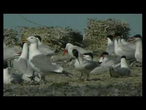 Степи Даурии – о номинации Всемирного природного наследия ЮНЕСКО  (Даурский заповедник )