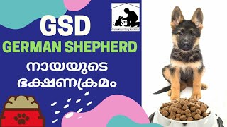 Dog Food Malayalam : German Shepherd Diet : Part 1
