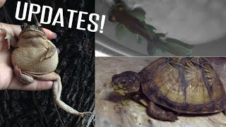 facetiming a viewer, black telescope update, toad update, and turtle stuff!