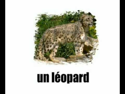 Lezione di francese = gli animali 1