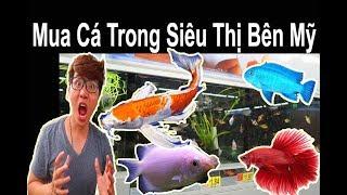Vlog 116: Đi Mua Cá Cảnh Trong Siêu Thị Bên Mỹ 🐠 Ryan Nguyen_The Fish Lover