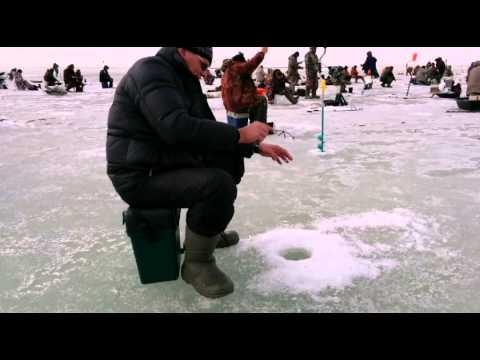 прогноз клева рыбы в новосибирской области озеро чаны