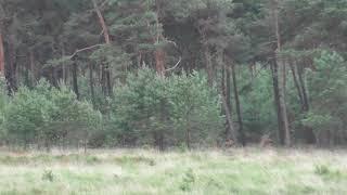 Weekend video kijken op een groot open veld