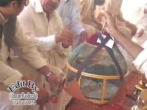 Black Bird Tournament, Haripur (black Francolin), Kala Teetar video