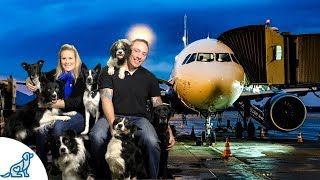 Flying With Your Dogs- Tips For A Safe Trip - Live Chat