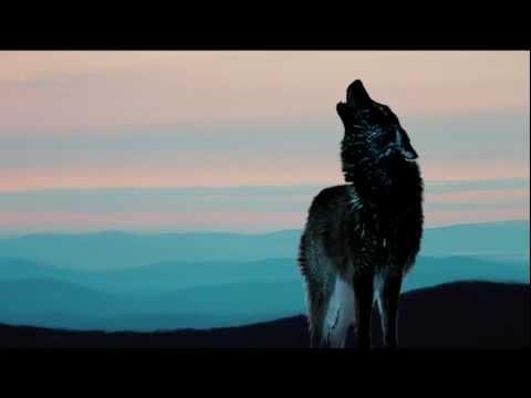 Herb Alpert And The Tijuana Brass - El Lobo The Wolf