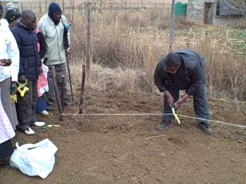 Isipho gardening training - groundbreaking and first seedlings being
