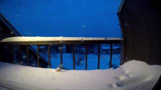 02-09-2017 Snow Time lapse in Williamsport, PA