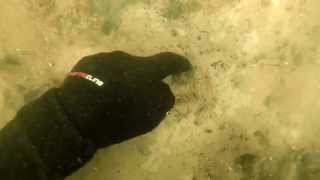 Подводный поиск scuba diving /Scuba diving Underwater metal detecting