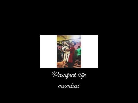 Pawfect Life Mumbai || Travel Vlog|| Fun Sunday