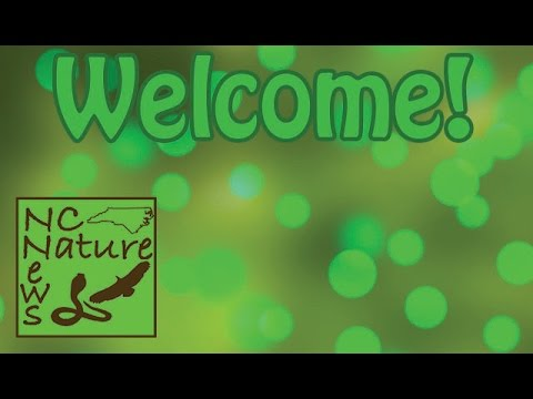 Welcome to the NC Nature News! (NCNN Intro)
