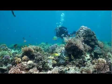 Scuba Diving Cebu, Phillipines - Underwater Video HD - Fülöp-szigeteki búvárkodás