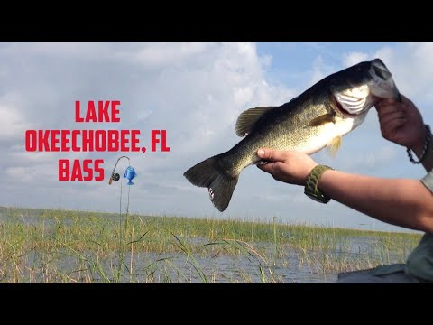 LargeMouth Bass fishing @ Lake Okeechobee, FL on Sunglasses cam