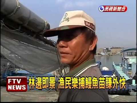 冷氣團報到 捕撈鰻魚苗旺季-民視新聞