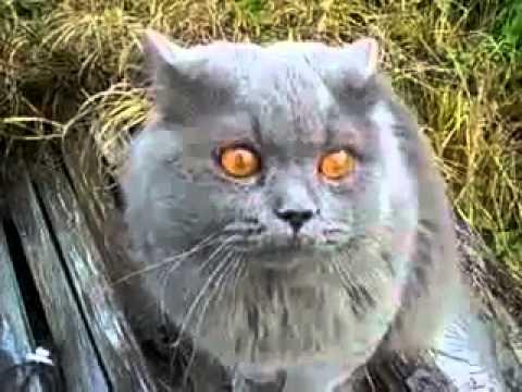 İlginç Sesler Çıkaran Kedi