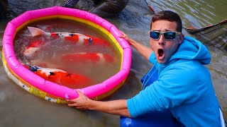 Plastic POOL With MILLIONS Worth In KOI!!