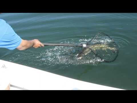 Let's Go Fishin' Charters catch and release clips