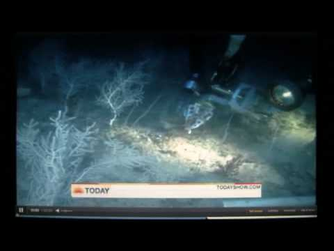 "Exclusive Underwater Footage of ""Oil Spill's"" Damage To The Gulf, Coral, & Wildlife.mp4"