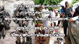 കാട് വളഞ്ഞുള്ള മീൻപിടുത്തം   കരിമീൻ കുറഞ്ഞ വിലയിൽ   Kerala Style   Local Fishing   Catching Fish