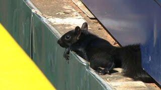 BOS@DET: Tigers TV discusses squirrel at Comerica