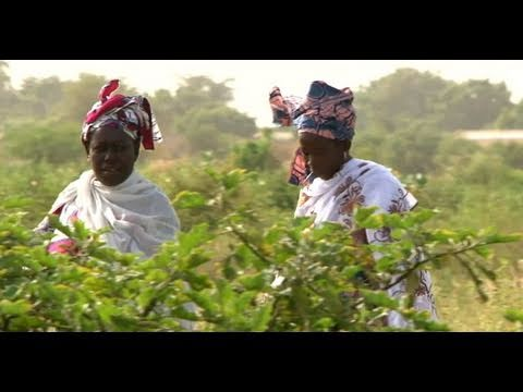 Agriculture Means More Food and Independence for Mauritania's Women