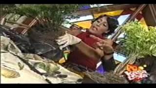 Siembra y recoge - como mantener arbustos enanos