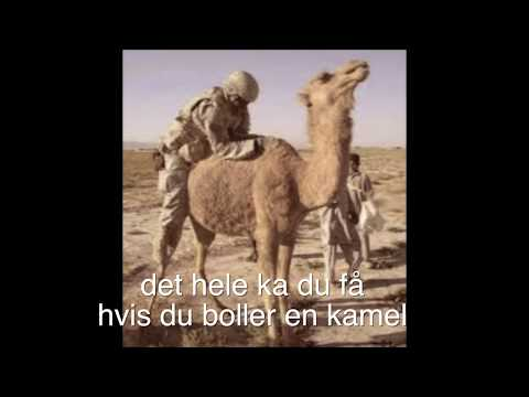 Boller En Kamel     Screw A Camel (kan Ses) :-) video
