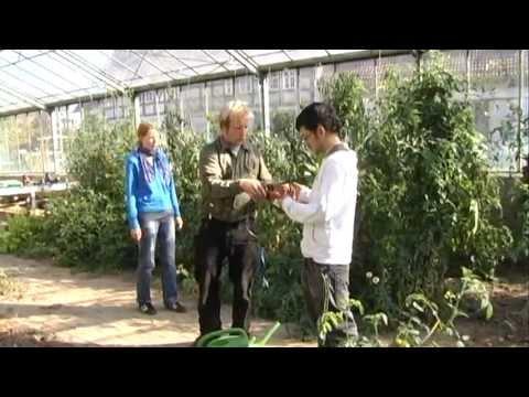 Ökologischer Gartenbau - Garten Eine Schule Fürs Leben