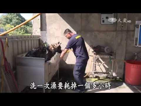 台灣-小人物大英雄-20150706 汪星人出任務