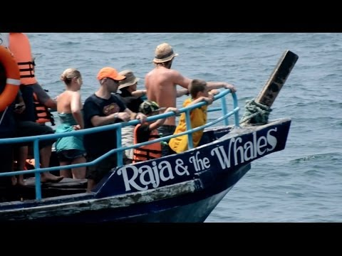 Whale Watching In Sri Lanka With Raja & The Whales video
