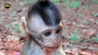 Pity Charles Big Monkey Wants to Kill A baby/ Baby Monkey Scare while Mum a way Angkor daily 1119