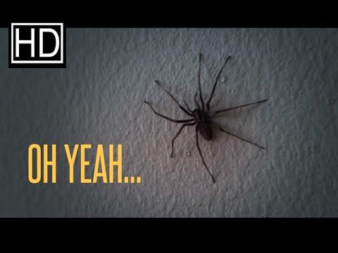 Un appartement infesté d'araignées