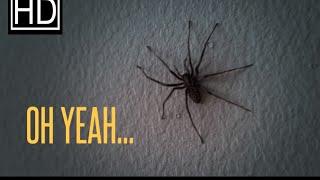 رجل عاد إلى بيته من العمل فشاهد عناكب كثير على الحائط