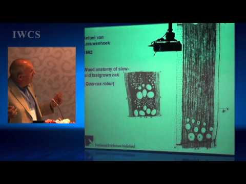 Wood Science for Wood Culture - Past, Present and Future