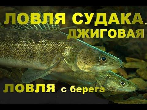 судак рыбалка с берега