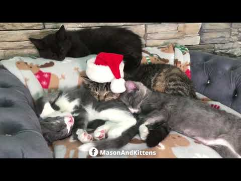 Merry Christmas from Grandpa Mason - TinyKittens.com