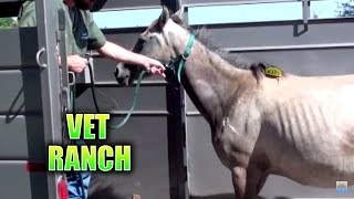 Pregnant Horse Rescued from Auction and Slaughter