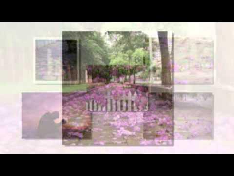 Hoa bằng lăng ( Jimmy Nguyễn) - Thùy Dương