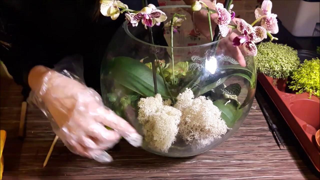 Как сделать флорариум для орхидей своими руками 1