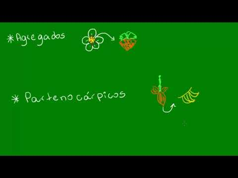 Frutos múltiplos, pseudofruto e partenorcarpia - Botânica - Biologia