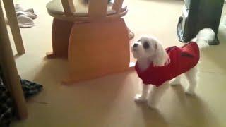 Top 10 dog barking funny videos compilation
