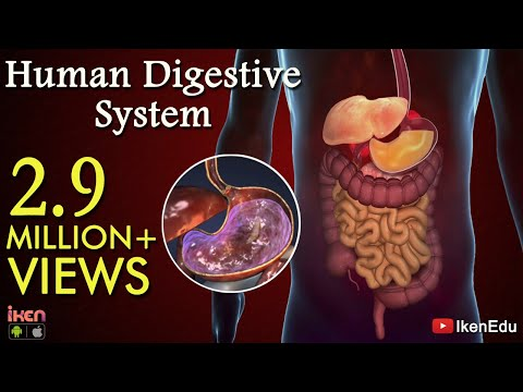how to clean up digestive system