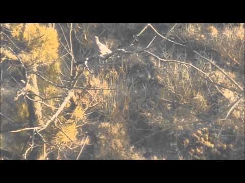 Stoeger x20 Suppressor 4 disparos 3 muertes 90 metros