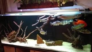 Интерактивный аквариумный туризм Сезон 2 Выпуск 20(Экватор)