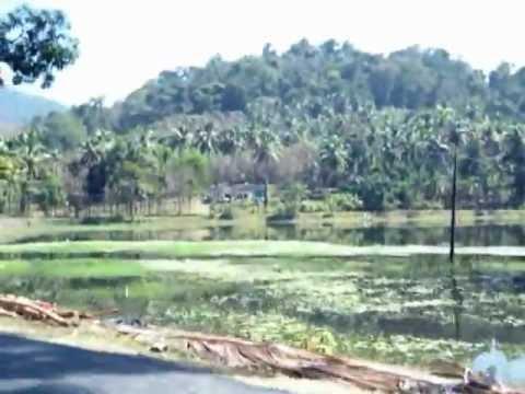Salim Ali Bird Sanctuary Kerala 001 Thattekad Salim Ali Bird's