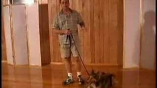 Dog Training - The Heel Command