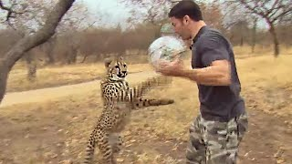 Cheetahs Play Football - Deadly 60 - Series 3 - BBC