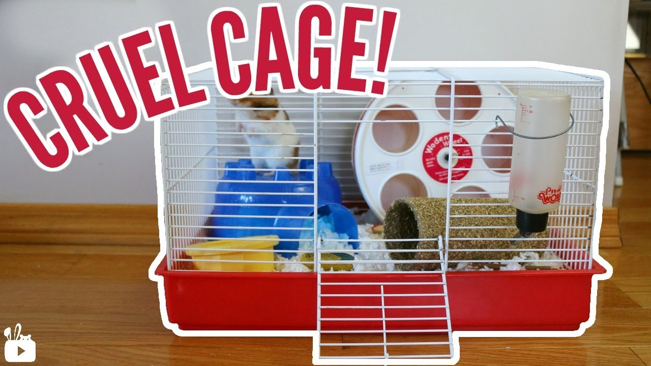 Syrian hamster cage size