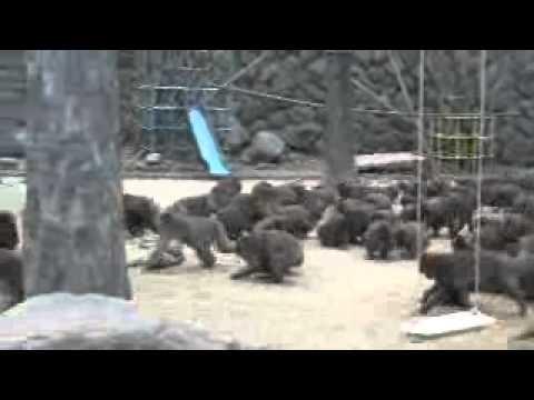 大分県 高崎山のお猿さん