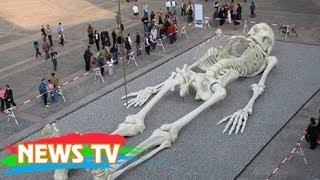 Video clip Những bộ xương khổng lồ gây tranh cãi nhất trong lịch sử